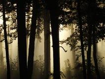 Nebbia di mattina nella foresta Fotografie Stock Libere da Diritti