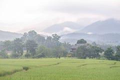 Nebbia di mattina a Pai immagine stock