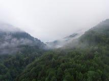 Nebbia di mattina sopra la foresta in montagna Fotografie Stock