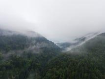 Nebbia di mattina sopra la foresta in montagna Fotografia Stock