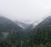 Nebbia di mattina sopra la foresta in montagna Immagine Stock