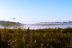 Nebbia di mattina su un nuovo campo raccolto Fotografia Stock