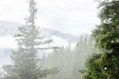 Nebbia di mattina sulla montagna Immagini Stock