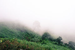 Nebbia di mattina sulle montagne Fotografia Stock