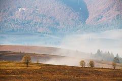 Nebbia di mattina in valle della montagna Colline nebbiose Fotografia Stock