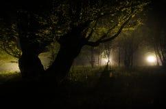 Nebbia di notte nel villaggio mysterious Luce della luna Accendere oscillazione vicino all'albero nell'iarda La luce dalla parte  fotografia stock libera da diritti