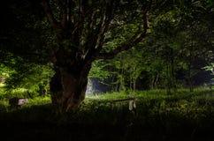 Nebbia di notte nel villaggio mysterious Luce della luna Accendere oscillazione vicino all'albero nell'iarda La luce dalla parte  immagini stock libere da diritti
