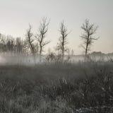 Nebbia di primo mattino Immagini Stock Libere da Diritti