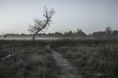 Nebbia di primo mattino Immagine Stock