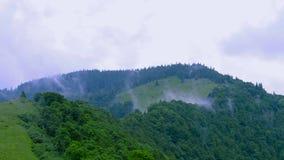Nebbia di rotolamento nelle montagne di Carpatian archivi video