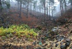 Nebbia dopo la pioggia, La Palma della foresta delle Canarie Fotografia Stock Libera da Diritti