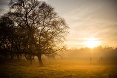 Nebbia dorata sopra il parco di Sefton Immagine Stock