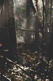 Nebbia e corrente dal legno Fotografie Stock Libere da Diritti