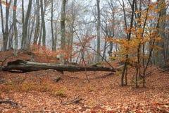 Nebbia e foglie cadute Immagini Stock Libere da Diritti