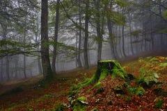 Nebbia e foresta, magia Fotografia Stock Libera da Diritti