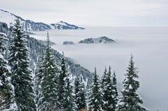 Nebbia e foresta in Tien Shan del nord Immagine Stock