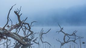 Nebbia e foschia di primo mattino sopra un lago calmo in Lituania archivi video