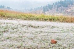 Nebbia e rugiada in colline pedemontana di Colorado Fotografie Stock Libere da Diritti
