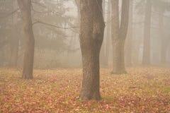 Nebbia ed alberi Fotografie Stock Libere da Diritti