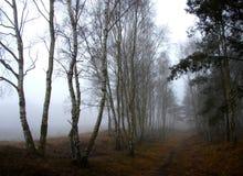 Nebbia ed alberi Fotografia Stock