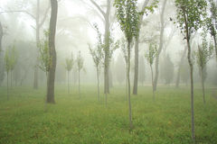 Nebbia in foresta Fotografia Stock Libera da Diritti