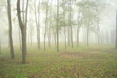 Nebbia in foresta Fotografie Stock Libere da Diritti