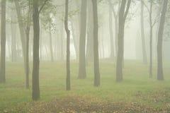 Nebbia in foresta Immagini Stock Libere da Diritti