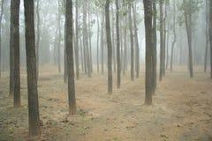 Nebbia in foresta Fotografia Stock