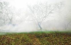 Nebbia in foresta Immagine Stock