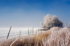 Nebbia ghiacciata Immagine Stock