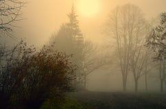 Nebbia in giardino Immagini Stock