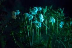 Nebbia a luce della luna con il fiore bianco Fotografia Stock Libera da Diritti