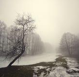 Nebbia misteriosa Fotografia Stock Libera da Diritti