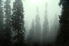 Nebbia mistica Immagini Stock Libere da Diritti