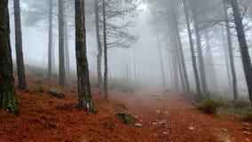Nebbia nebbiosa fra gli alberi Immagine Stock Libera da Diritti