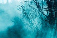 Nebbia nei precedenti di colore della foresta Fotografie Stock