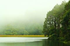 Nebbia nel bacino idrico Fotografie Stock Libere da Diritti