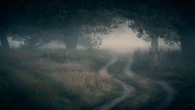 Nebbia nel boschetto della quercia Fotografia Stock