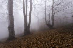 Nebbia nel legno Immagini Stock Libere da Diritti