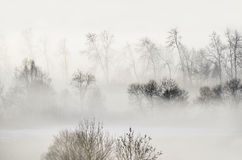Nebbia nel legno Fotografia Stock