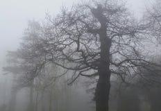 Nebbia nel parco Fotografia Stock Libera da Diritti