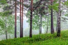 Nebbia nella foresta Fotografie Stock Libere da Diritti