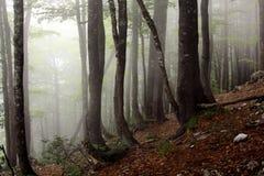 Nebbia nella foresta fotografie stock