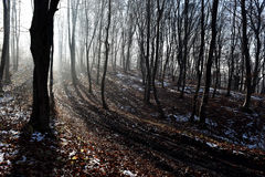 Nebbia nella foresta Immagini Stock