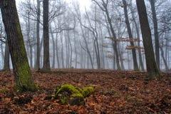 Nebbia nella foresta del faggio nell'orario invernale fotografia stock