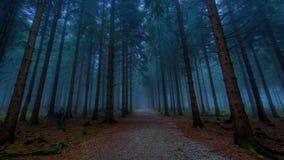 Nebbia nella foresta della Polonia fotografie stock libere da diritti