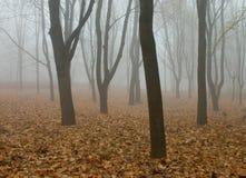 Nebbia nella foresta di autunno Fotografia Stock