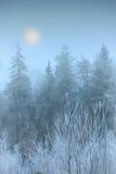 Nebbia nella foresta di inverno Fotografia Stock Libera da Diritti