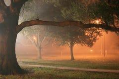Nebbia nella sosta Fotografia Stock