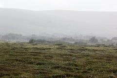 Nebbia nella valle del prato, foschia di mattina Immagine Stock Libera da Diritti